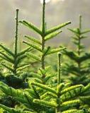 Baum-Bauernhof Stockfoto