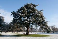 Baum bedeckt im Schnee Lizenzfreies Stockfoto