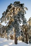 Baum bedeckt im Schnee Lizenzfreie Stockfotografie