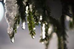 Baum bedeckt mit frischem Schnee nachts Winter Lizenzfreies Stockbild