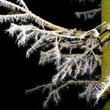 Baum bedeckt mit Hoarfrostnahaufnahme Stockfotografie