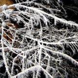 Baum bedeckt mit Hoarfrostnahaufnahme Stockbilder