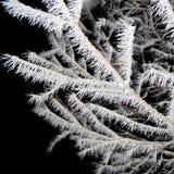 Baum bedeckt mit Hoarfrostnahaufnahme Lizenzfreie Stockfotografie