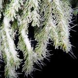 Baum bedeckt mit Hoarfrostnahaufnahme Lizenzfreies Stockbild