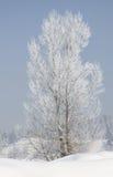 Baum bedeckt mit Reif und Schnee im Winter auf Waldhintergrund Stockfoto