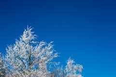 Baum bedeckt mit Schnee Lizenzfreie Stockfotos