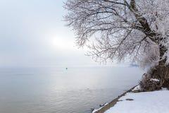 Baum bedeckt mit Schnee nahe dem Fluss Lizenzfreie Stockfotos