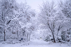 Baum bedeckt mit Schnee, Winterlandschaft Stockbilder