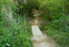Baum bedeckte Hinter-und Fuß-Brücke im Weißfisch-Ranch-Wildnis-Park stockfoto