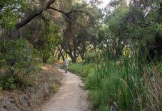 Baum bedeckte Spur im Weißfisch-Ranch-Wildnis-Park lizenzfreie stockbilder