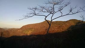 Baum bei der Weisenglättung Lizenzfreie Stockfotografie