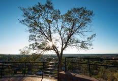 Baum bei Sonnenuntergang übersehen an von Santa Fe, New Mexiko Stockbild