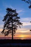 Baum bei Sonnenuntergang. Lizenzfreie Stockfotografie