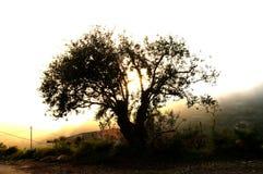 Baum bei Sonnenuntergang Lizenzfreies Stockfoto