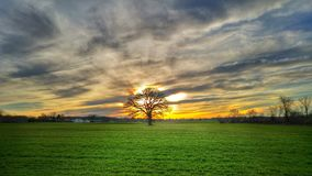 Baum bei Sonnenuntergang stockfotografie