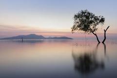 Baum bei Sonnenuntergang Lizenzfreies Stockbild