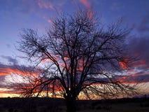 Baum bei Sonnenuntergang auf dem Gebiet Stockfoto
