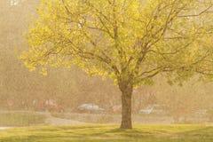 Baum bei Sonnenuntergang im Regen lizenzfreies stockbild