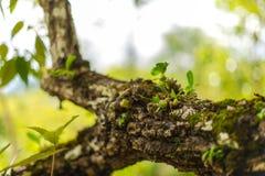 Baum beladen mit Moos und Orchidee Stockbilder