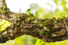 Baum beladen mit Moos und Orchidee Stockfoto