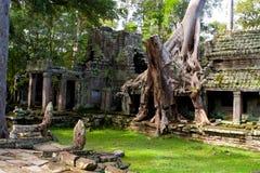 Baum beladener Tempel Stockfoto