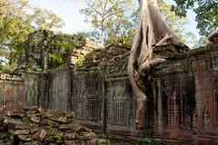 Baum beladener Tempel Stockfotografie