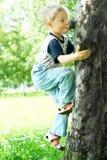 Baum-Bergsteiger Stockbild