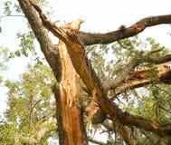 Baum beschädigt durch Blitzbolzen Stockbild