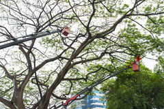 Baum-Beschneidung Stockfotografie