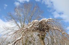Baum besprüht mit Schnee Lizenzfreie Stockfotografie