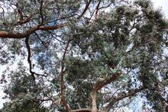 Baum bewaffnet Himmel Lizenzfreies Stockbild