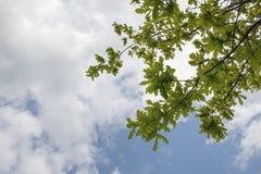 Baum-Blätter und Niederlassungen über Wolken und blauem Himmel Stockfotos