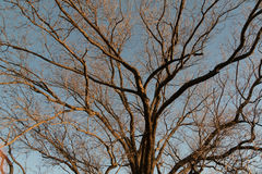 Baum Brannches Lizenzfreie Stockfotografie