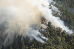 Baum brennt oben im Waldbrand stockbild
