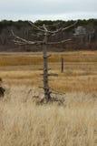 Baum in Brewster, MA Stockbild
