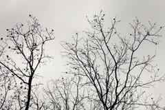 Baum-Brunchs und bewölkter Himmel Stockbild