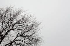 Baum-Brunchs und Himmel Lizenzfreies Stockfoto