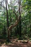 Baum in Carnac (Bretagne, Frankreich) Lizenzfreie Stockfotografie