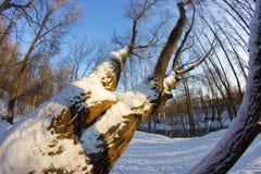Baum coverd mit Schnee Stockbild