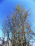 Baum in Crookham, Nord-Northumberland, England Stockbild