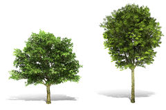 Baum 3d übertragen auf weißem Hintergrund Stockfotos