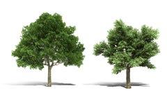 Baum 3d übertragen auf weißem Hintergrund Stockfotografie