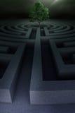 Baum in das Labyrinth Lizenzfreie Stockbilder