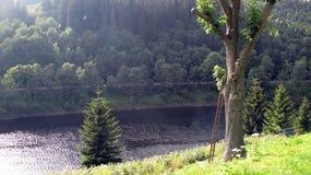 Baum in dem Fluss Lizenzfreie Stockbilder