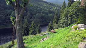 Baum in dem Fluss Lizenzfreie Stockfotografie