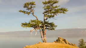 Baum in den Bändern Stockbild
