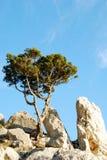 Baum in den Felsen Stockbilder