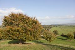 Baum in den Herbstfarben in Somerset England Lizenzfreies Stockbild