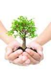 Baum in den Händen Lizenzfreie Stockbilder