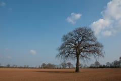 Baum in den Sümpfen stockbild